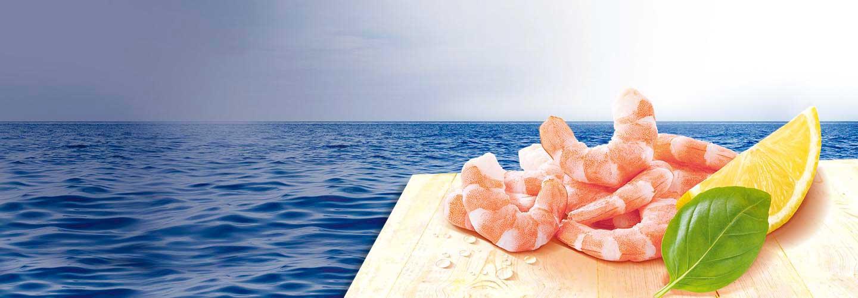 Crustaces et Mollusques Natures Crevettes