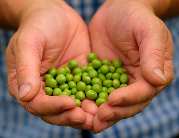 Proteine Vegetali - Findus