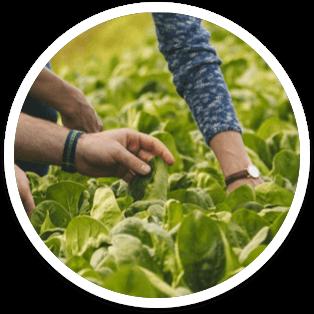 Contadini e Agronomi Findus