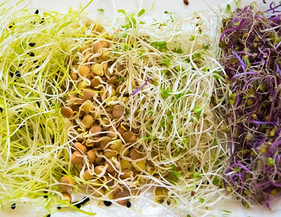 Proprietà e benefici dei germogli – usi in cucina dei germogli