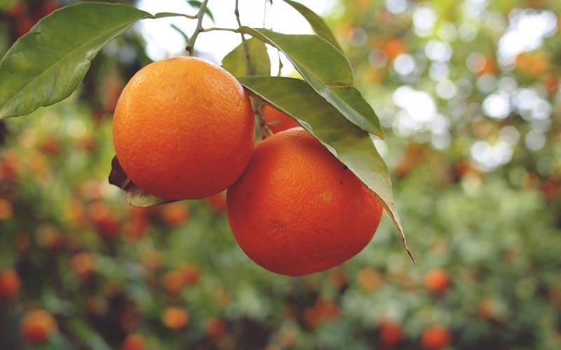 Vitamina C Alimenti e Proprietà – Consigli Alimentazione Findus