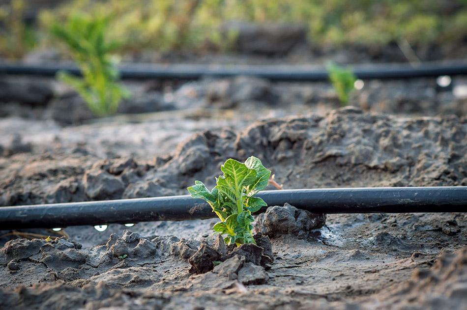 L Irrigazione A Goccia Per Il Risparmio Idrico Findus