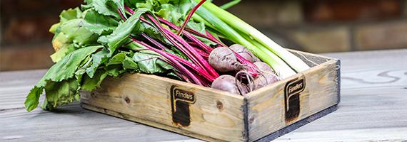 Rödbetor, purjolök och andra grönsaker i en Finduslåda