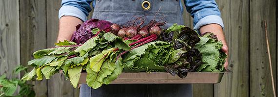 Blandade grönsaker på bricka som hålls av händer