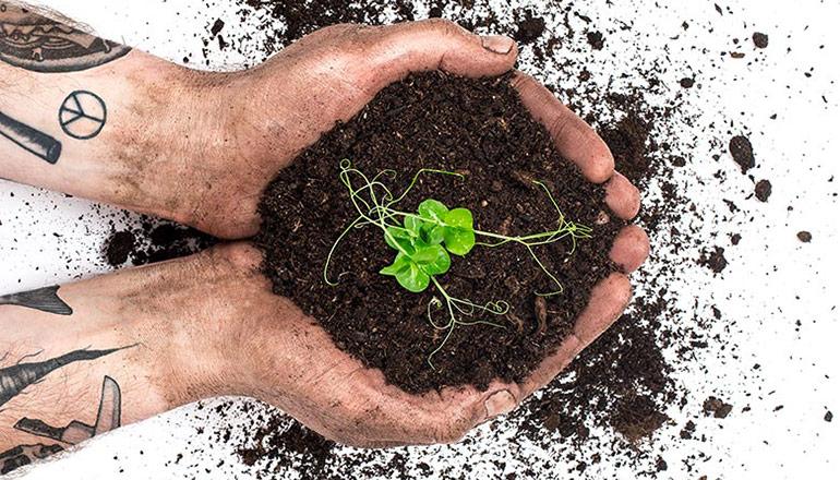 Hand med tatuerade armar håller i jord där det växer grönt ur