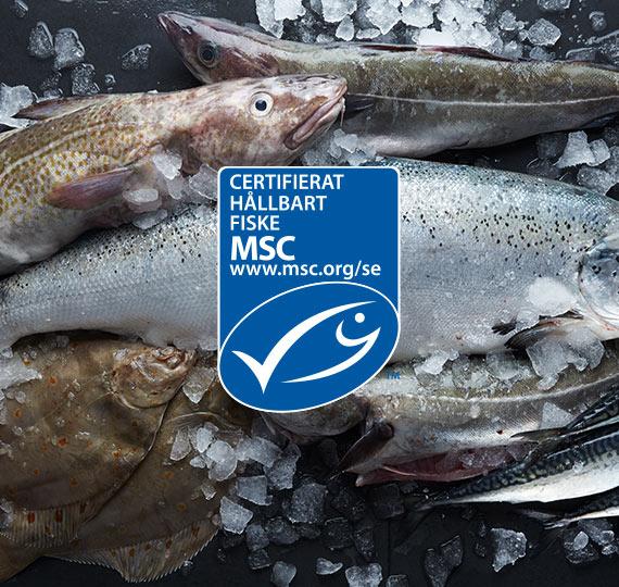 MSC logga över bild med fiskar