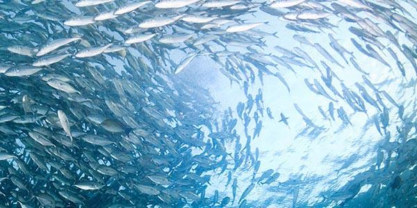 Nachhaltiger Fischfang