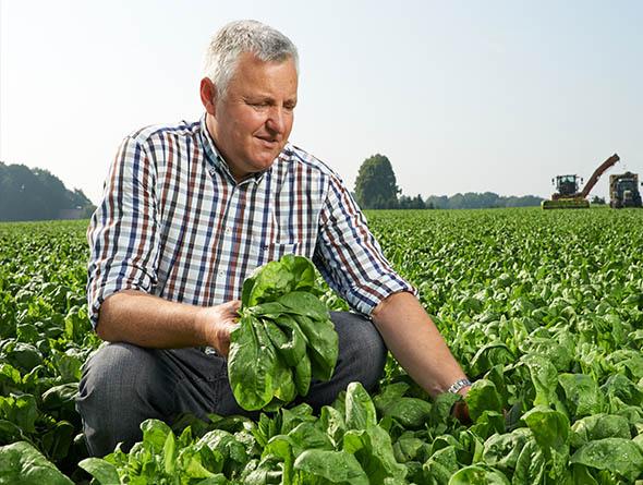 Landwirt im Spinatfeld