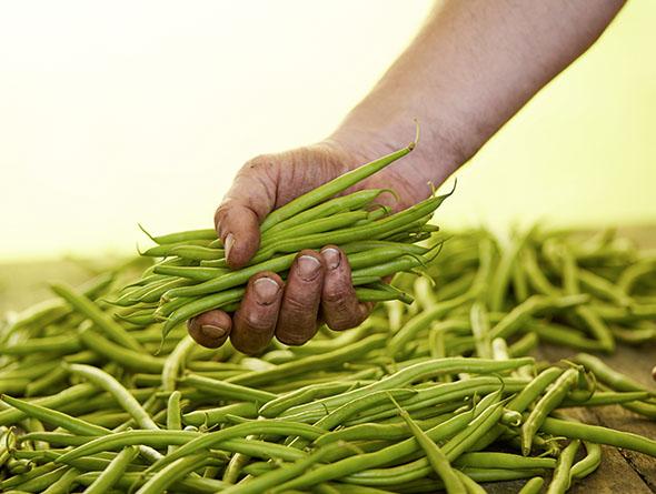 rohe Bohnen in einer Hand