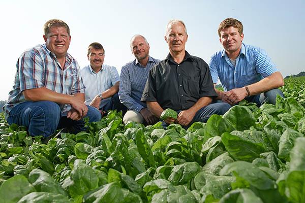 5 iglo Landwirte und Anbauberater in einem Spinatfeld