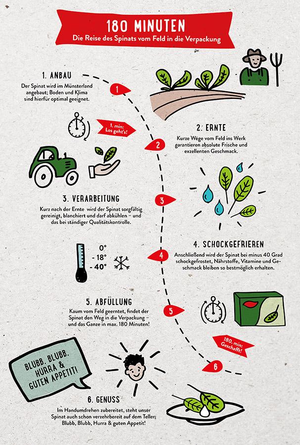 Infografik mit dem Weg des Spinats in die Verpackung